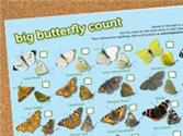Take Part in the Big Butterfly Count