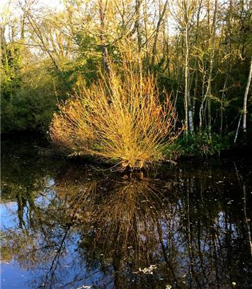 On Reflection - Carolyn MacDougall - Autumn Photographic Competition